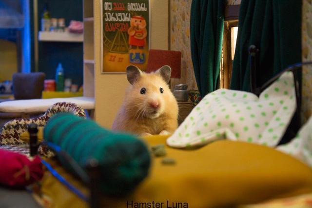 pho hamster2